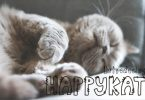 Happykat Font