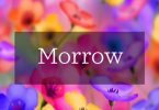 Morrow Font