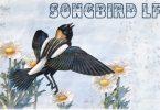 Songbird LF Font