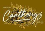 Canthonys Brush Script Font