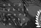 Qaigero | Modern Serif