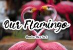 Our Flamingo Font